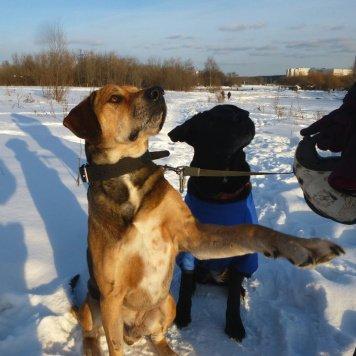 Тиша - Собаки в добрые руки