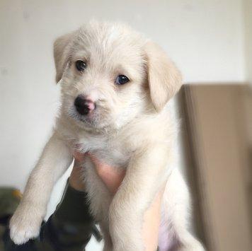 Трэвис - Собаки в добрые руки