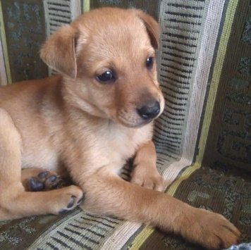Тунис - Собаки в добрые руки