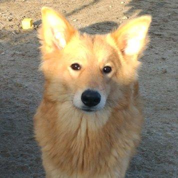 Санни - Собаки в добрые руки