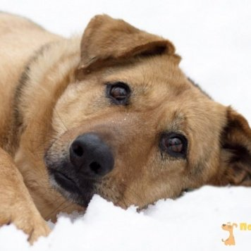 Сараби (Сара) - Собаки в добрые руки