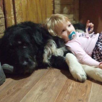 Буран - Собаки в добрые руки
