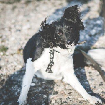 Милка - Собаки в добрые руки