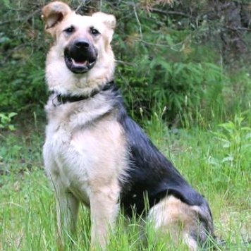 Дэтта - Собаки в добрые руки