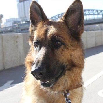 Лэппи - Собаки в добрые руки