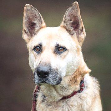 Рашель - Собаки в добрые руки