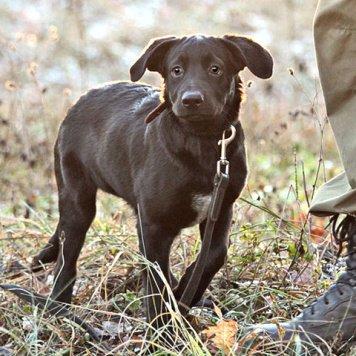 Лара - Собаки в добрые руки