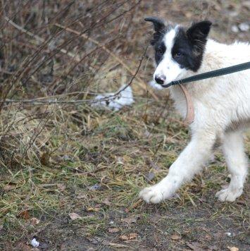 Яша - Найденные собаки
