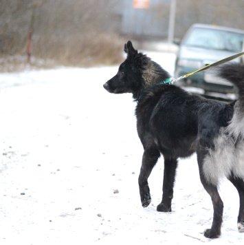 Маркиз - Найденные собаки