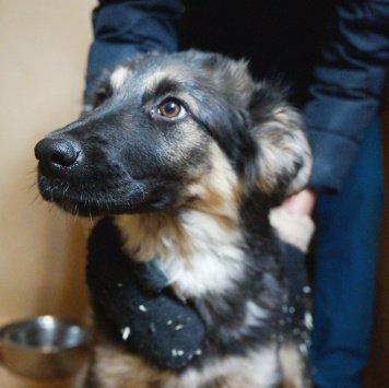 Мэрлин - Собаки в добрые руки