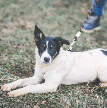 Абби - Собаки в добрые руки