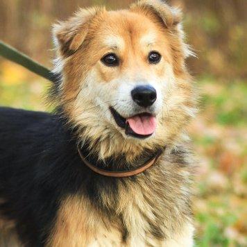 Прага - Собаки в добрые руки