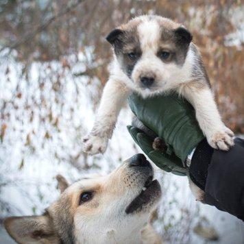 Лайчонок - Собаки в добрые руки