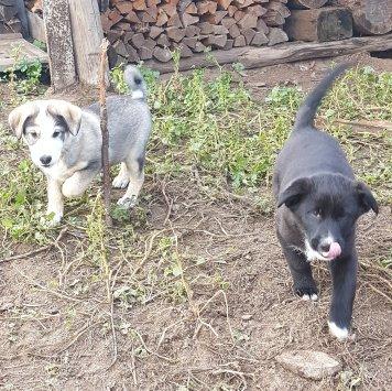 Два малыша - Собаки в добрые руки