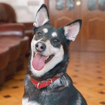 Санча - Собаки в добрые руки