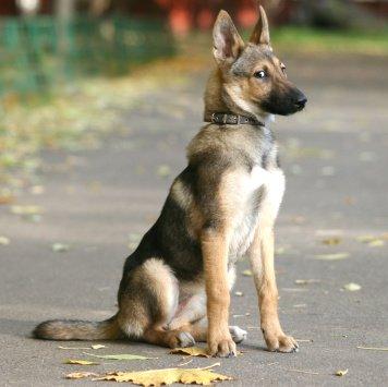 Мадлен - Собаки в добрые руки