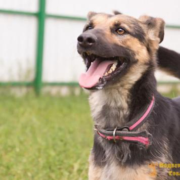 Кимба - Собаки в добрые руки