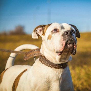Дамиан - Собаки в добрые руки