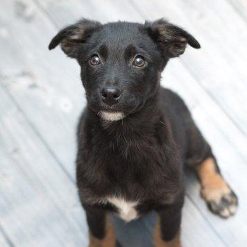 Вальтер - Собаки в добрые руки