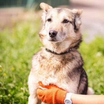 Арника - Собаки в добрые руки