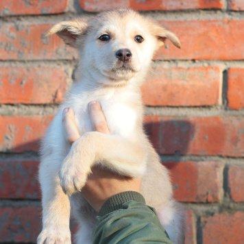 Лючия - Собаки в добрые руки