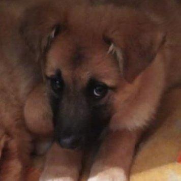 Оливия - Собаки в добрые руки