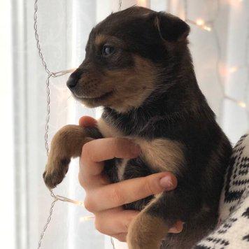 Джейкоб - Собаки в добрые руки