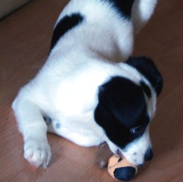 Бимка - Собаки в добрые руки