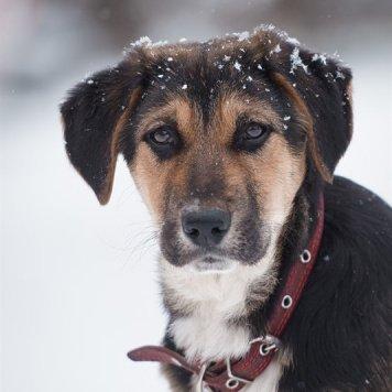 Стася - Собаки в добрые руки