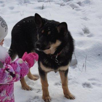 Локки - Пропавшие собаки