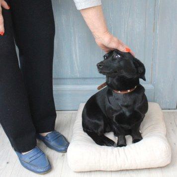 Чапа - Собаки в добрые руки