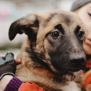 Роза - Собаки в добрые руки