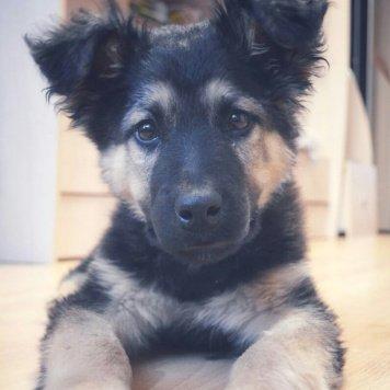 Майк(Макс) - Собаки в добрые руки