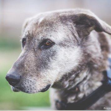 Сильвер - Собаки в добрые руки