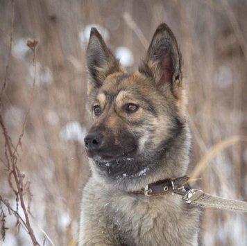 Щенок Микки - Пропавшие собаки
