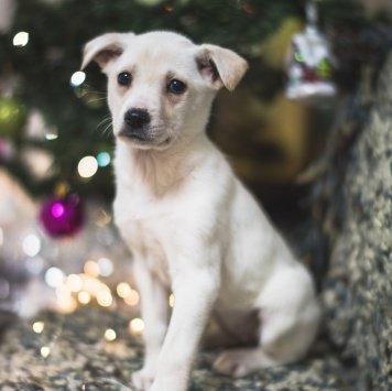 Безешка - Собаки в добрые руки