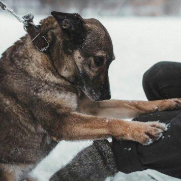 Сандра - Собаки в добрые руки