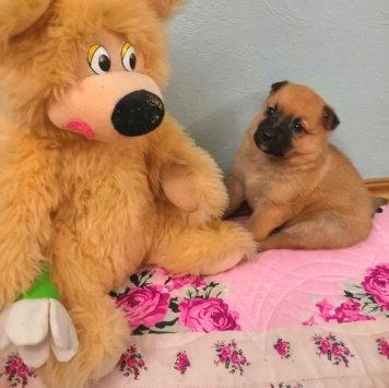 Радочка - Собаки в добрые руки