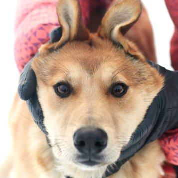 Лисса - Собаки в добрые руки