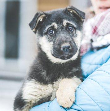 Палома - Собаки в добрые руки