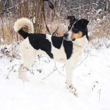 Степанида - Собаки в добрые руки