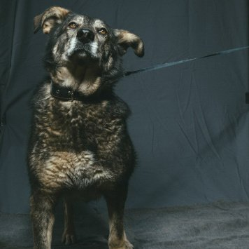 Анюта - Собаки в добрые руки