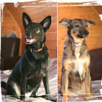 Линда и Эля - Собаки в добрые руки