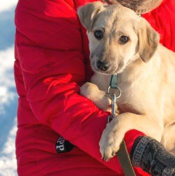 Булочка - Собаки в добрые руки