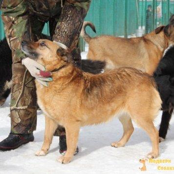 Клёпа - Собаки в добрые руки