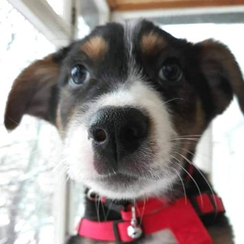 Робинзон - Собаки в добрые руки