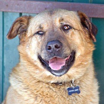 Рыж - Собаки в добрые руки