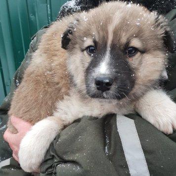Винни Пух - Собаки в добрые руки