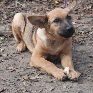 Ниночка - Собаки в добрые руки