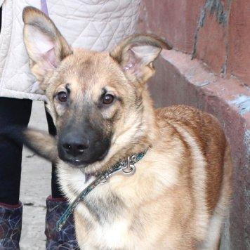 Серафим - Собаки в добрые руки